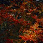 pexels-photo-589807