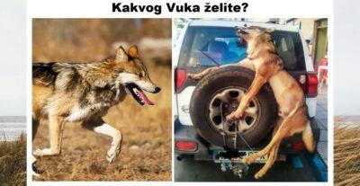 Vukovi_embeded3